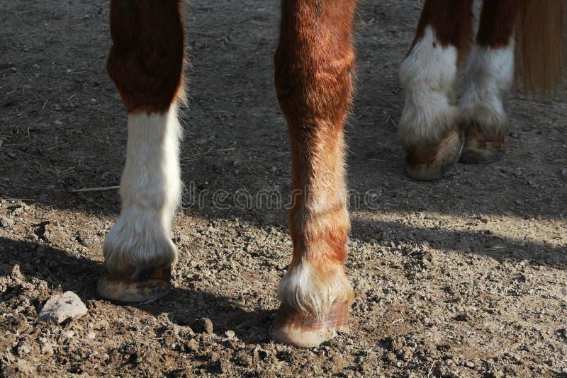 马的蹄 库存照片