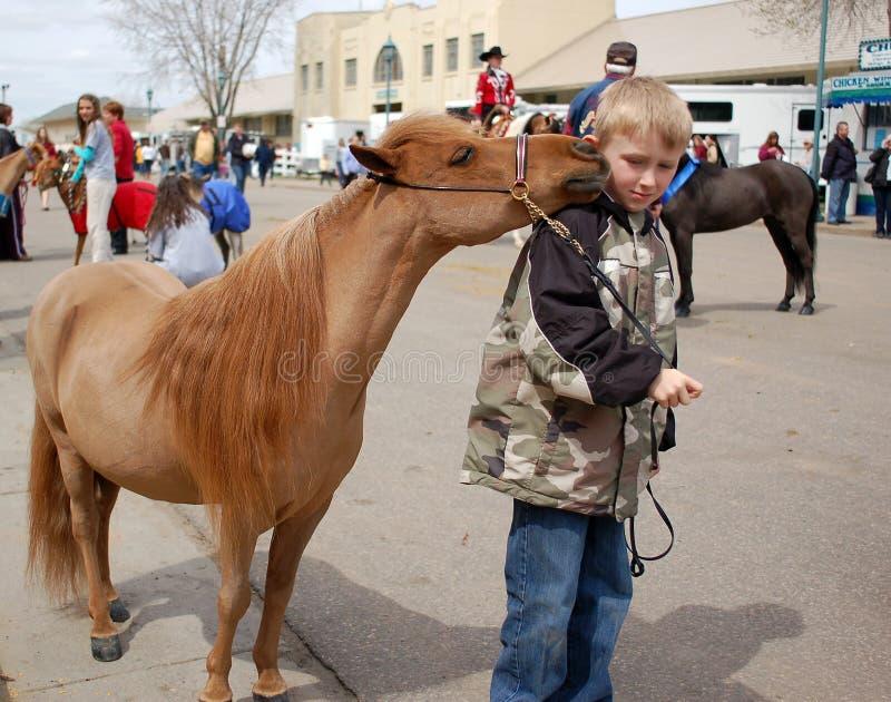 马缩样 图库摄影