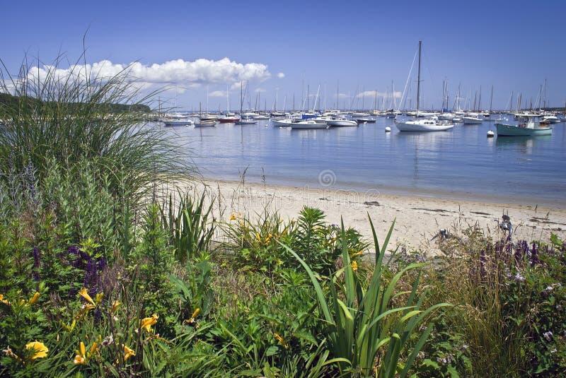 马莎s海口视图葡萄园 库存照片