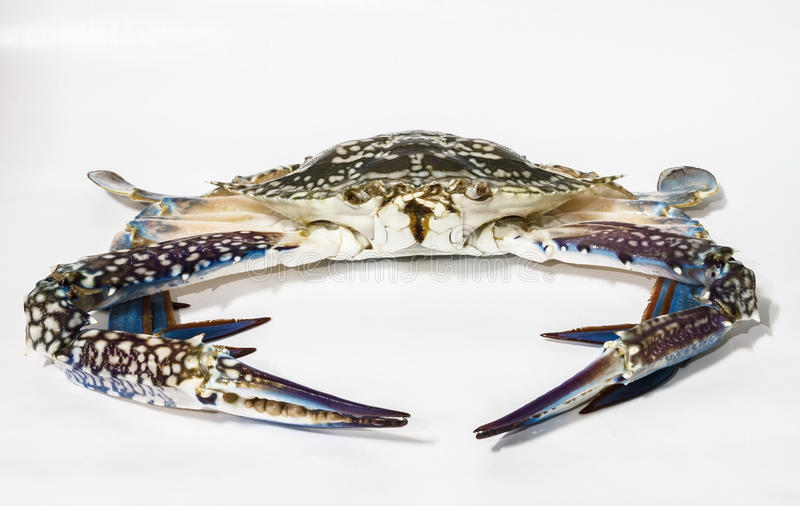 马螃蟹 免版税库存图片
