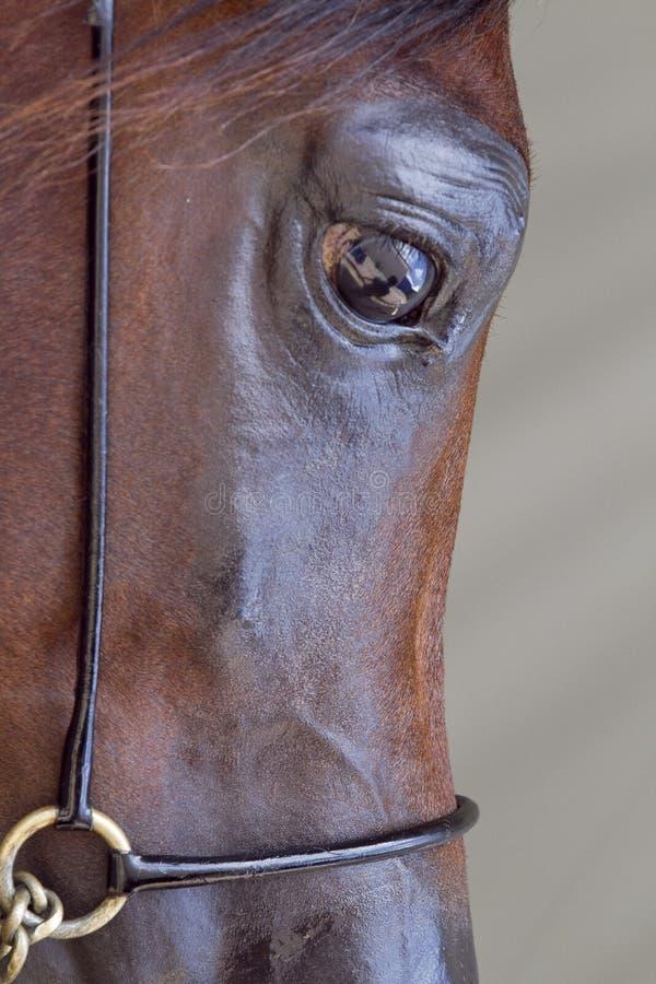 马表面 免版税库存图片