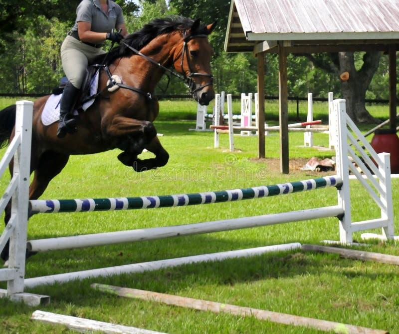 马跳跃的障碍 图库摄影