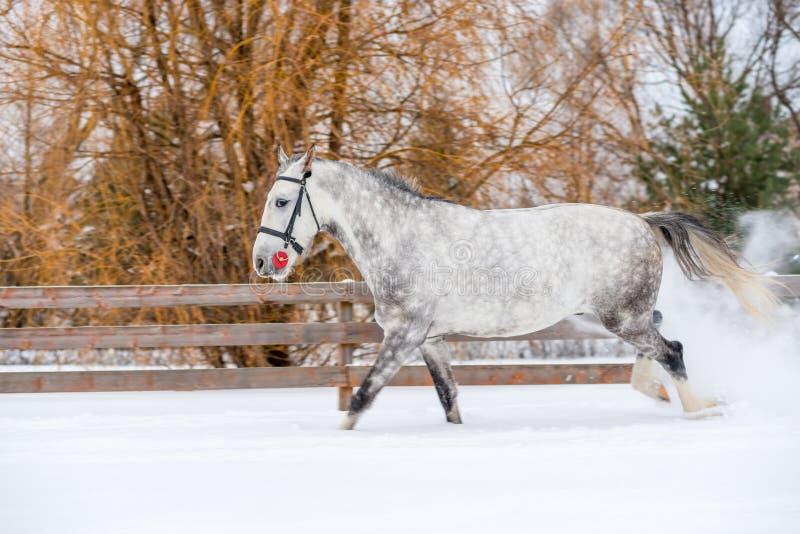 马跳进在雪的一个苹果 库存图片