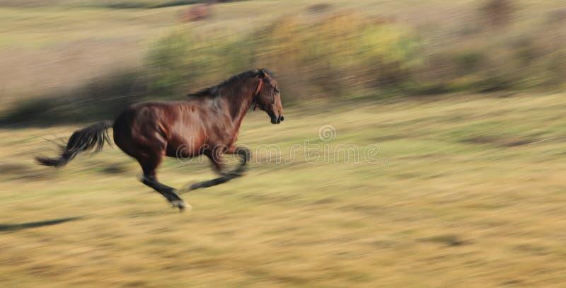 马运行中 库存图片