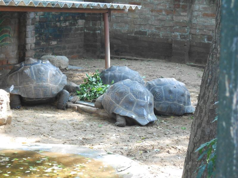 马都拉斯鳄鱼银行信任,金奈,南印度,泰米尔纳德邦 库存图片