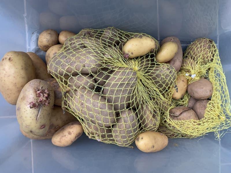 马铃薯幼苗航空影像景观 库存图片