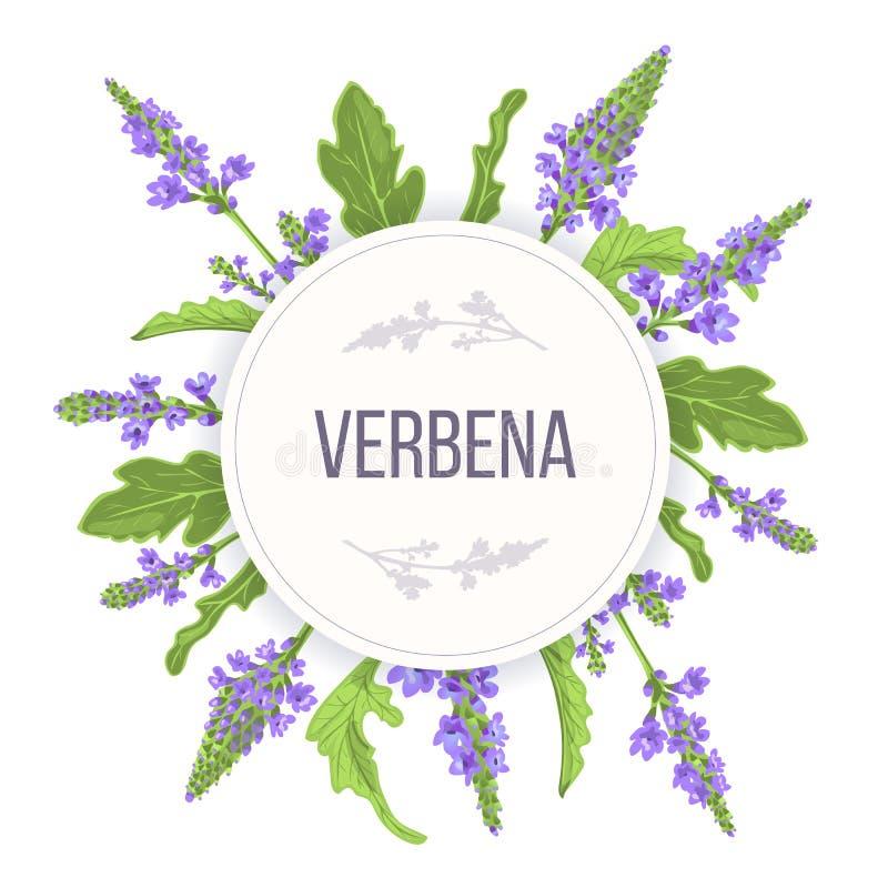 马鞭草属植物回合圈子徽章 叶子分支、花和叶子 Vervain草本模板 对替代医学 库存例证