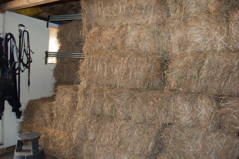 马饲料的冬天干草 库存图片