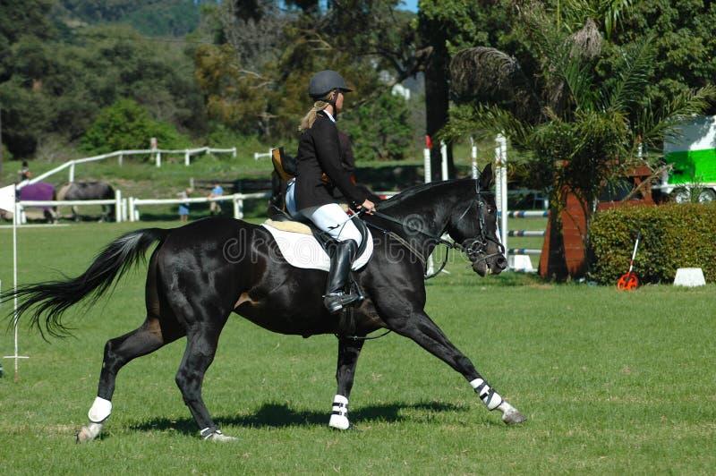 马骑术体育运动 免版税库存图片