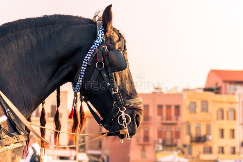 马骑术在干尼亚州克利特希腊 库存照片