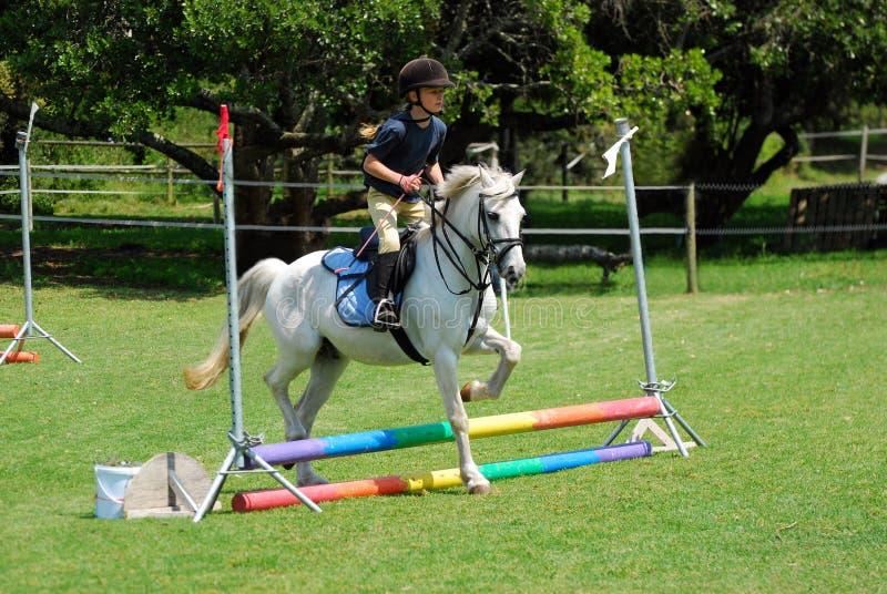 马骑术小女孩 库存图片