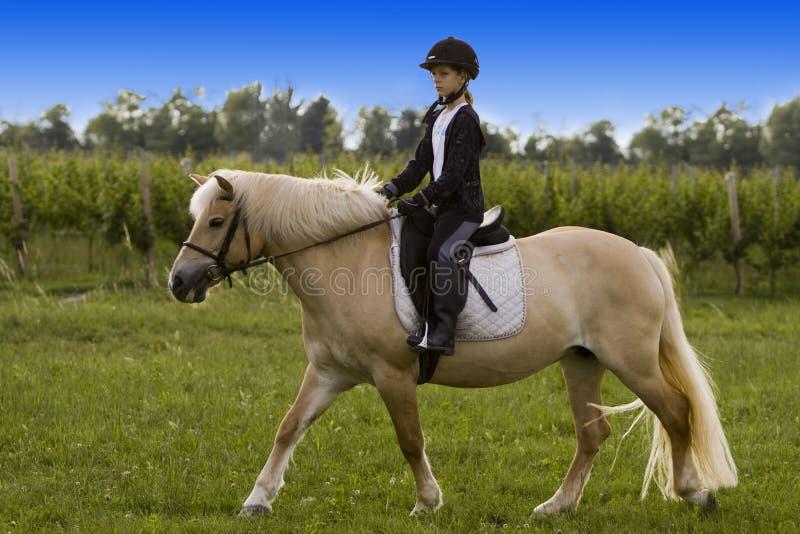马骑术少年 库存图片