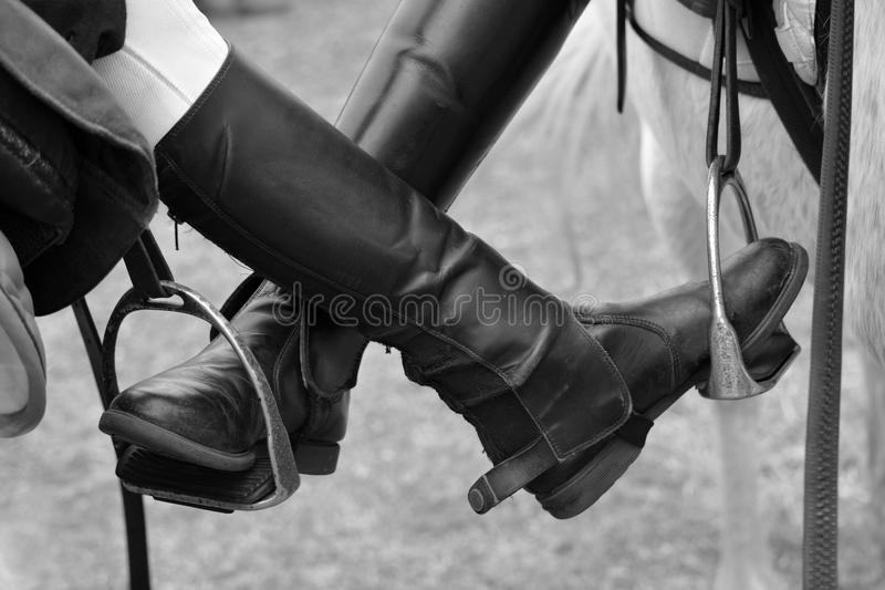 马骑术起动 库存图片