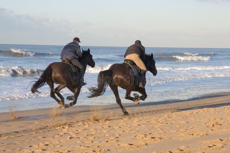 马骑术 免版税图库摄影