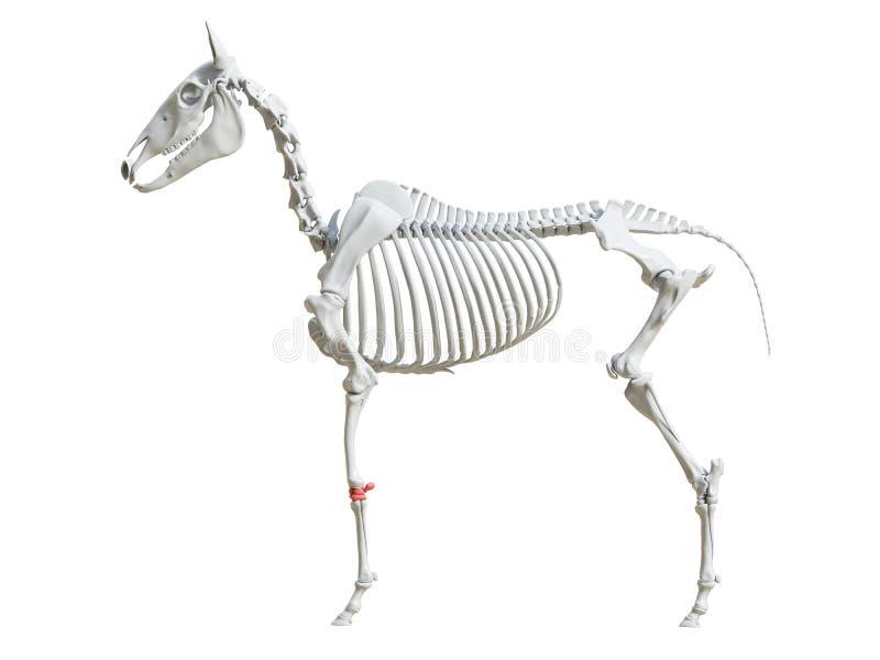 马骨骼-腕 皇族释放例证