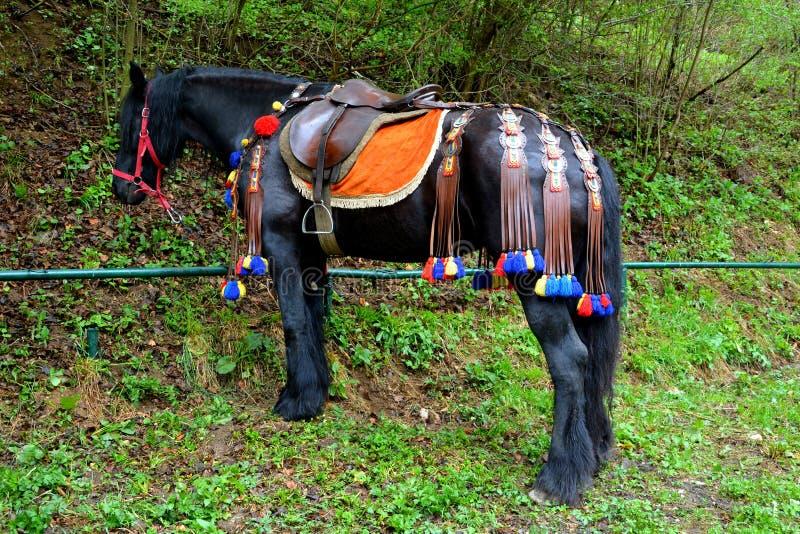 马,休息在Juni游行期间 免版税图库摄影