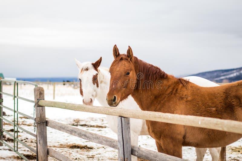 马:一个美丽+富有的骑马朋友 免版税库存图片