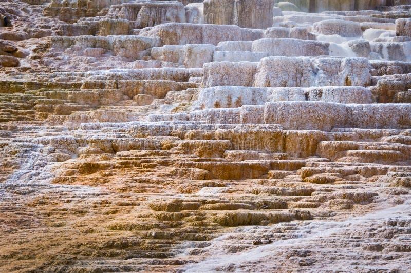 马默斯斯普林斯,黄石国家公园 免版税图库摄影