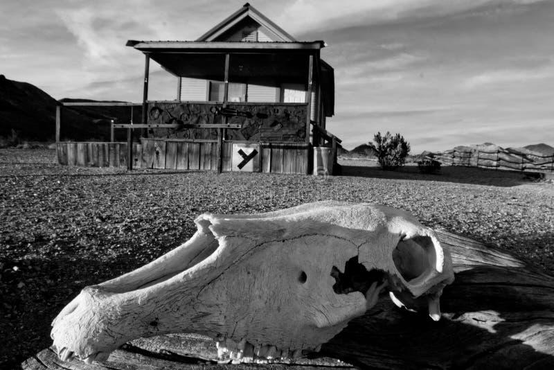 驮货驴子头骨在沙漠 库存照片
