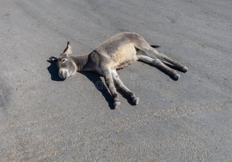 驮货驴子采取在街道上的休息 免版税库存照片