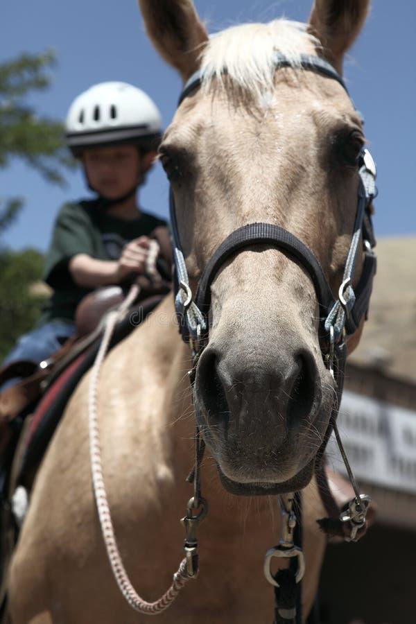 驯马马,骑马 免版税库存照片