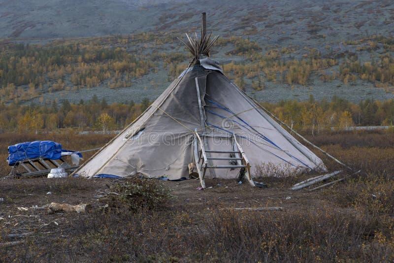 驯鹿孤立帐篷与雪撬的 库存图片