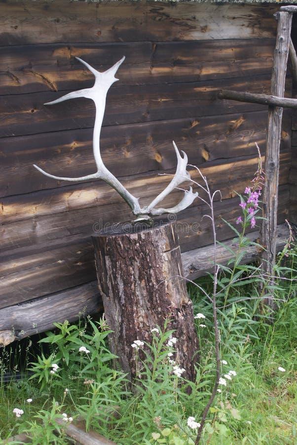 驯鹿鹿角,瑟米公园,挪威 免版税库存照片