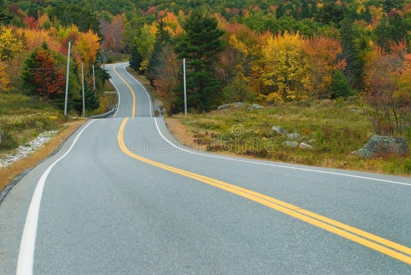 驱动风景秋天的森林 免版税库存图片