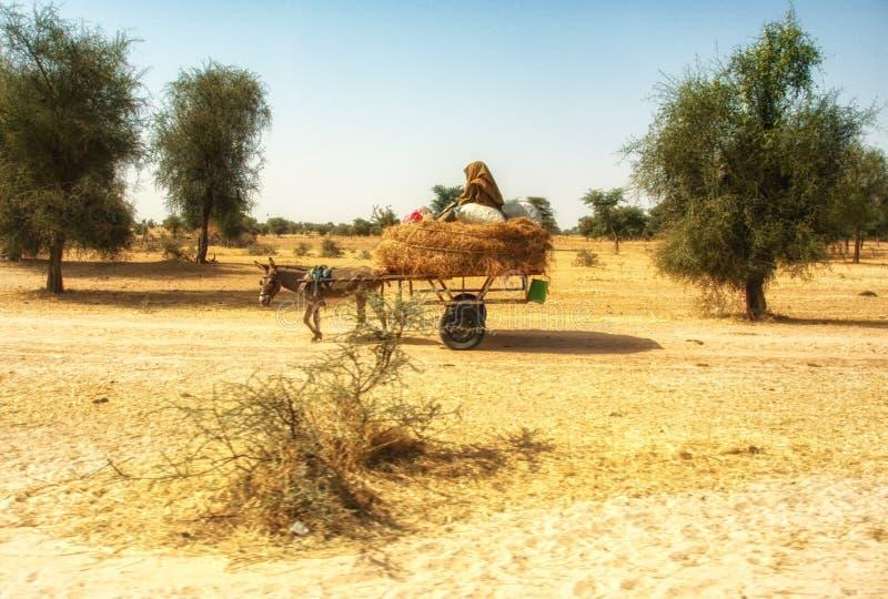 驴货车在达喀尔,塞内加尔 免版税库存照片