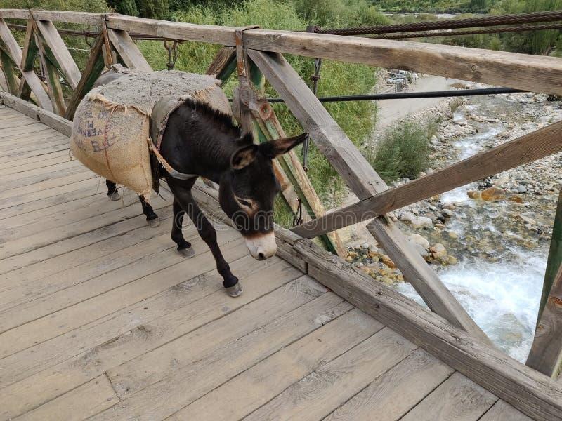 驴运载的大袋装载 免版税库存图片
