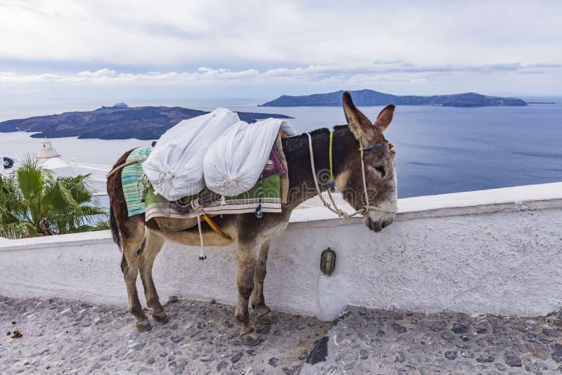 驴,圣托里尼海岛 免版税库存图片