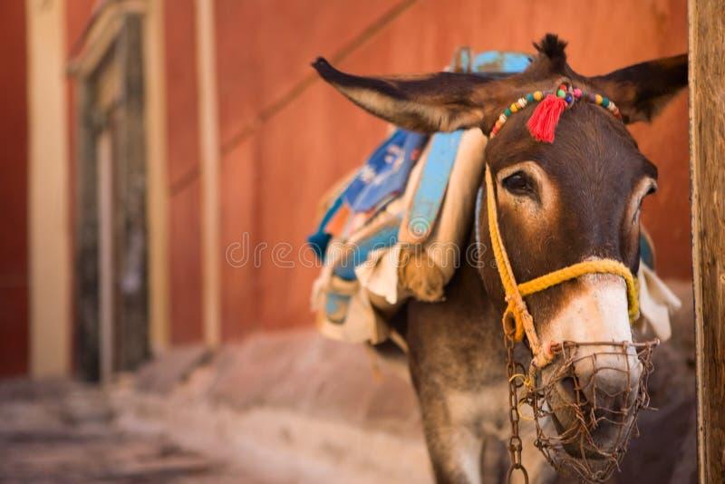 驴santorini 图库摄影