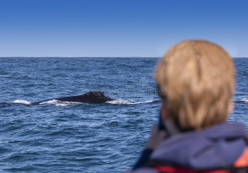 驼背鲸观看 免版税库存图片