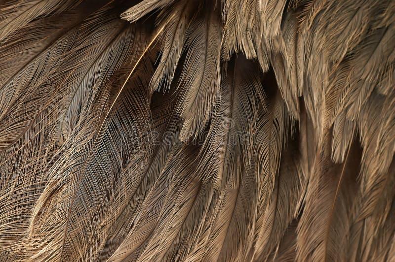 驼鸟全身羽毛结构 免版税图库摄影