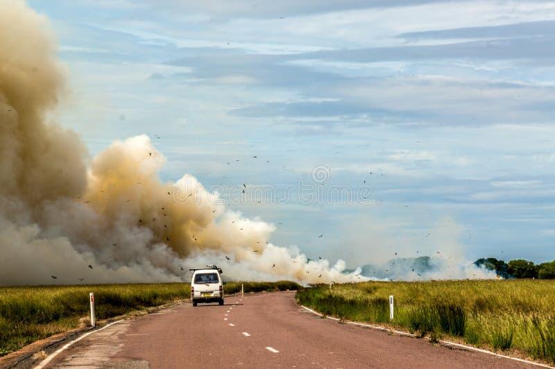 驾车到一受控林区大火在卡卡杜国家公园,用不同的鸟,北方领土,澳大利亚 免版税库存图片