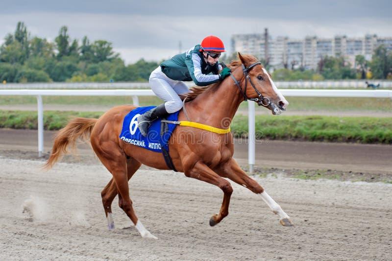 轻驾车赛用马舍入三轮的跑马 免版税图库摄影