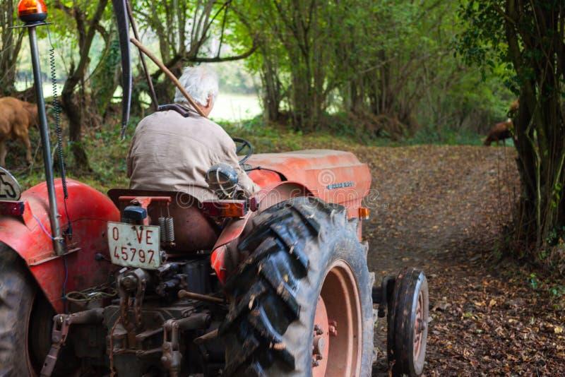 驾驶一台老拖拉机的一名老人在森林里 免版税库存图片