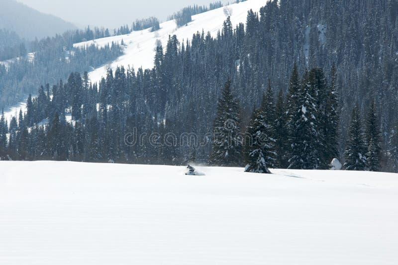 驾驶体育的人在一个晴天乘雪上电车 免版税库存图片