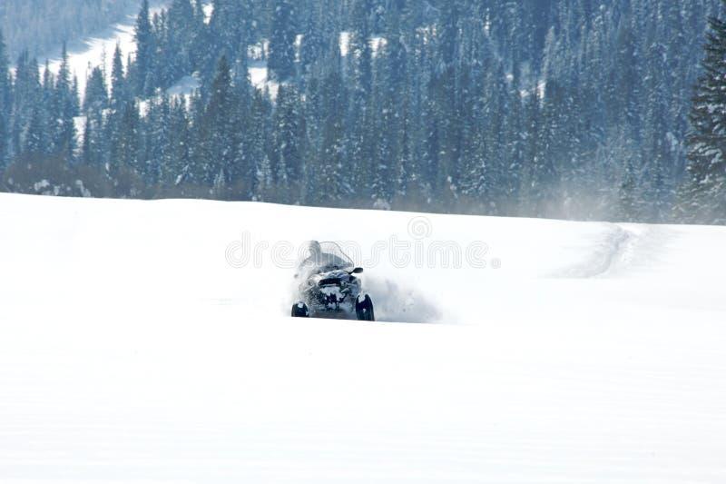 驾驶体育的人在一个晴天乘雪上电车 免版税库存照片
