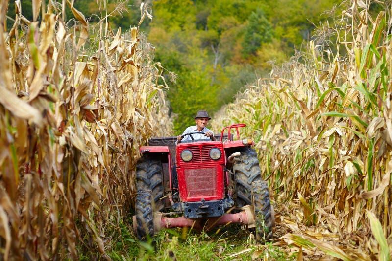 驾驶拖拉机的老农夫在玉米田 免版税库存照片