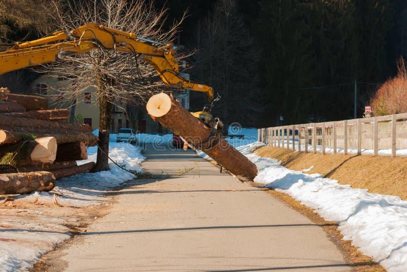 驾驶机械夹子的工作者运载一根大树干 免版税库存图片