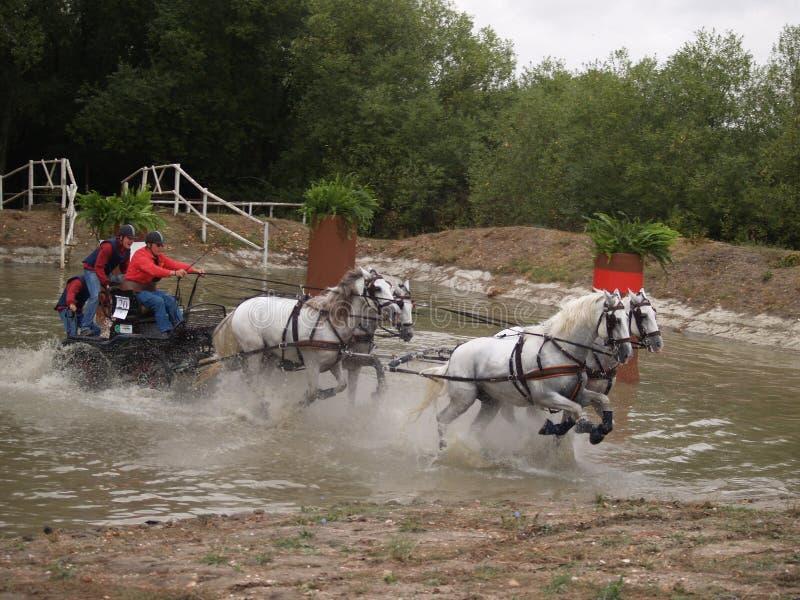 驾驶西班牙的马竞争 库存照片