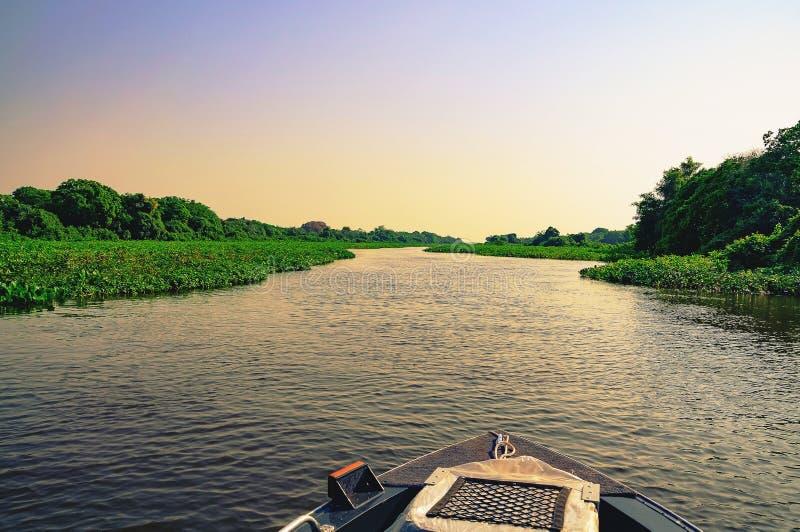 驾驶通过潘塔纳尔湿地洪水的小船在日落 免版税库存照片