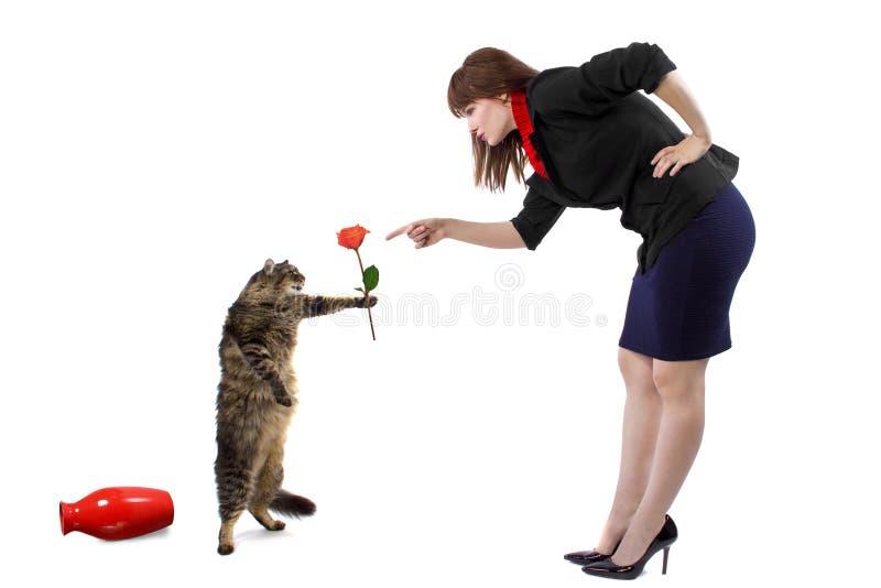 责骂猫 免版税库存图片