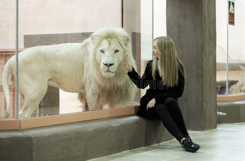 骄傲的野兽白色狮子 免版税库存图片