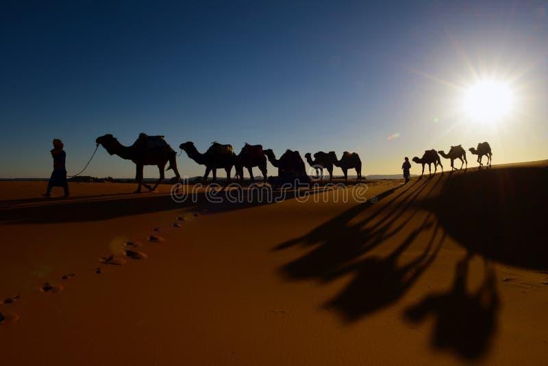 骆驼与日落的有蓬卡车剪影在撒哈拉大沙漠, 免版税库存图片