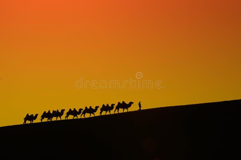 骆驼丝绸之路旅途在沙漠新疆,中国 免版税库存图片