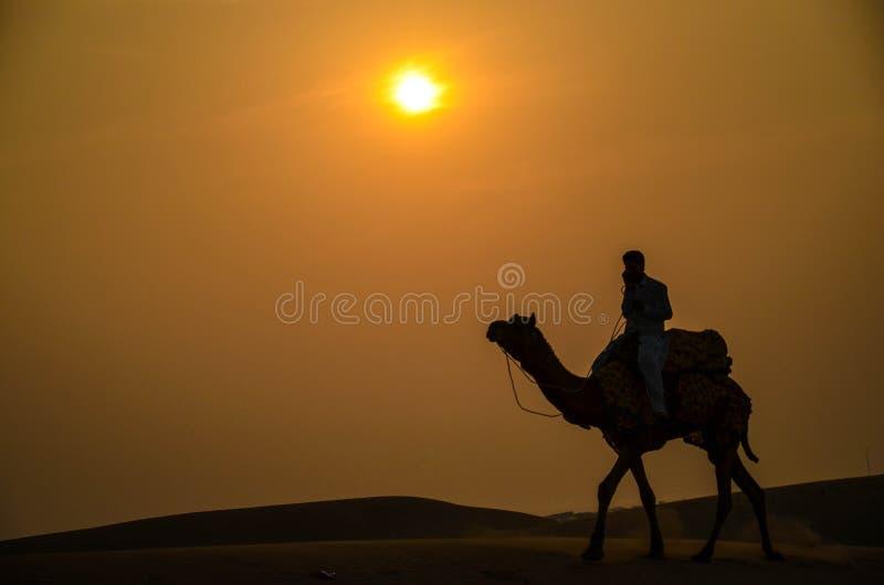 骆驼乘驾剪影在日落期间的,在塔尔沙漠, Jaisalmer,拉贾斯坦,印度, 免版税库存照片
