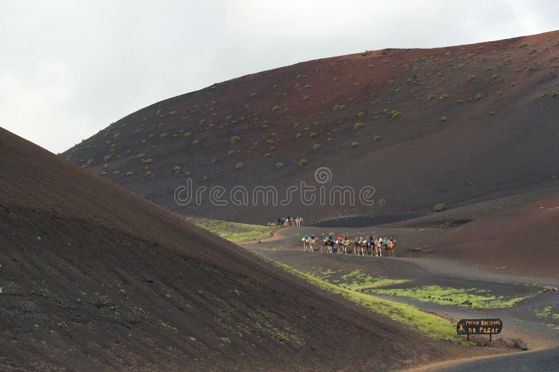 骆驼乘驾在兰萨罗特岛,旅游胜地, Timanfaya国家公园 库存照片