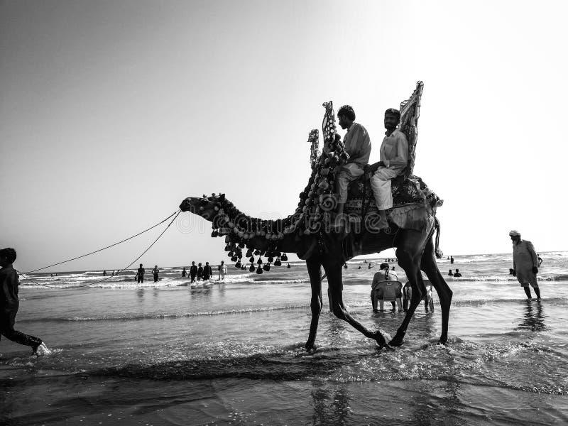 骆驼乘驾 库存照片